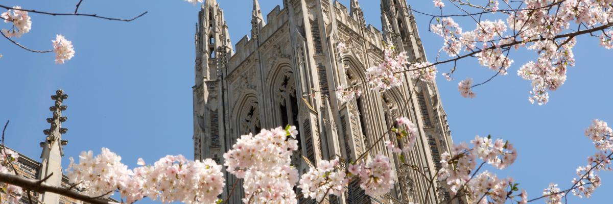 Blossoms at Duke Chapel
